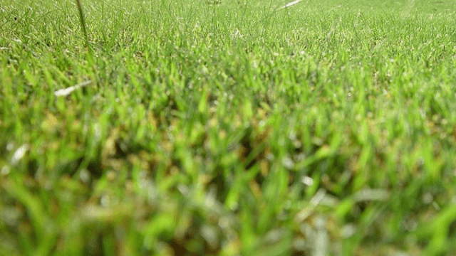 Lawn and the environment splash image
